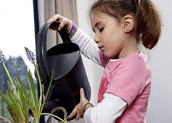 Ботаники из 100 видов комнатных растений отобрали лучшие по очистке, оздоровлению