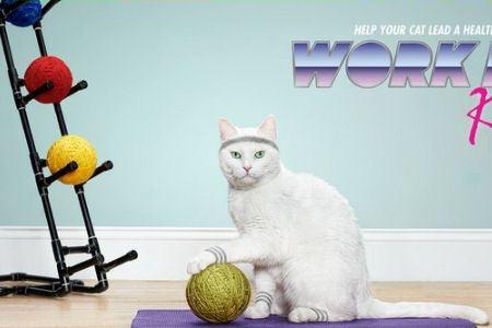 Спорт полезен даже котам