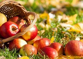 Одно яблоко в день способно омолодить на 17 лет