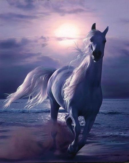 фото лошадей красивых пород