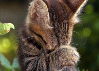 Богач из США завещал кошкам дом и все деньги