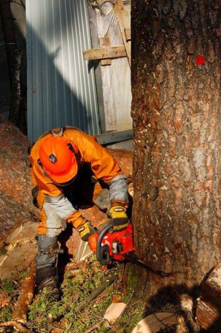 Иногда требуется срочно спилить дерево, угрожающее безопасности людей