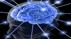 Центр удовольствия мозга