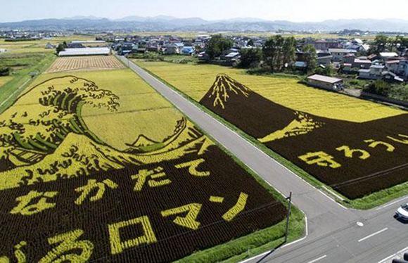 Японии предложили выращивать сою на Дальнем Востоке