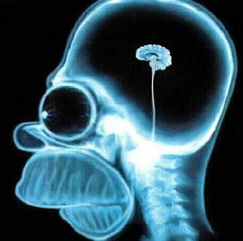 Британские ученые: мозг начинает стареть уже в 45 лет