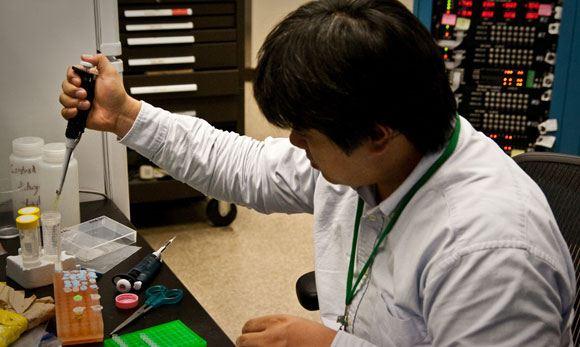 Токийские исследователи обнаружили вид пиявок-«моржей»