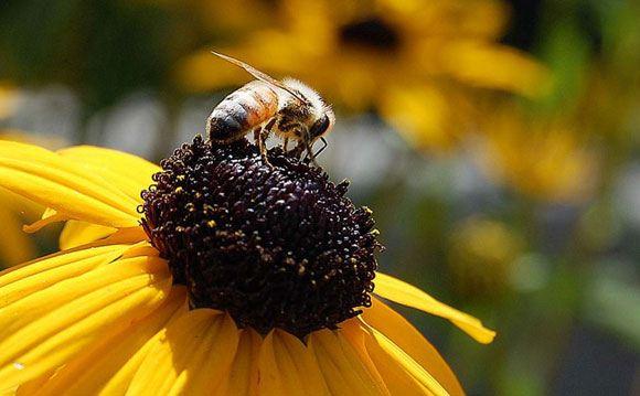 В США растет количество пчел-зомби