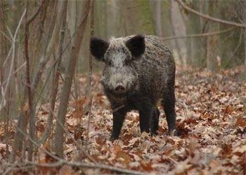 В Омской области вдвое увеличилось число диких лесных животных