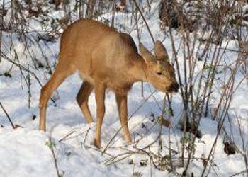 В лесах Омской области увеличилось число диких животных