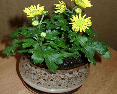 В Петропавловске-Камчатском к 8 марта распустятся 25 000 цветов