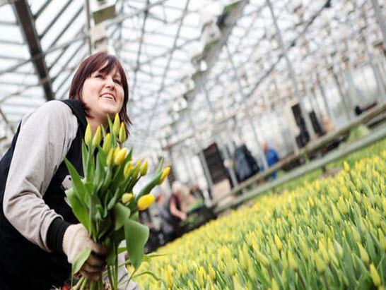 В Петропавловске-Камчатском к 8 марта вырастят 25 000 цветов