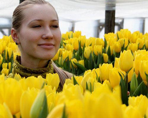 Калининградские цветоводы вырастили 6 миллионов цветов к празднику