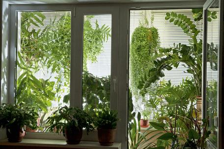 Балкон-зимний сад