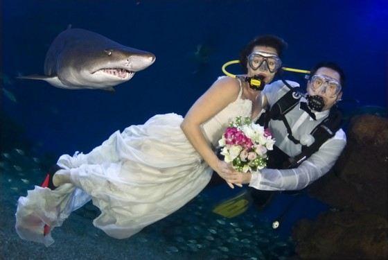 Необычная свадьба с акулами