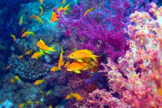 Красное море удивляет красотой своих глубин