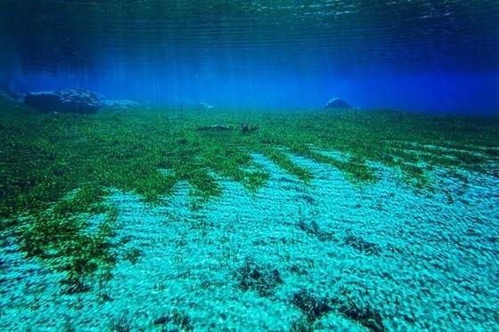 Голубое озеро в Новой Зеландии соперничает с Байкалом по чистоте