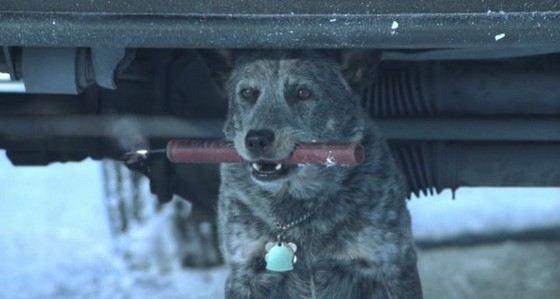 Собака тоже может стать причиной внезапной и нелепой смерти