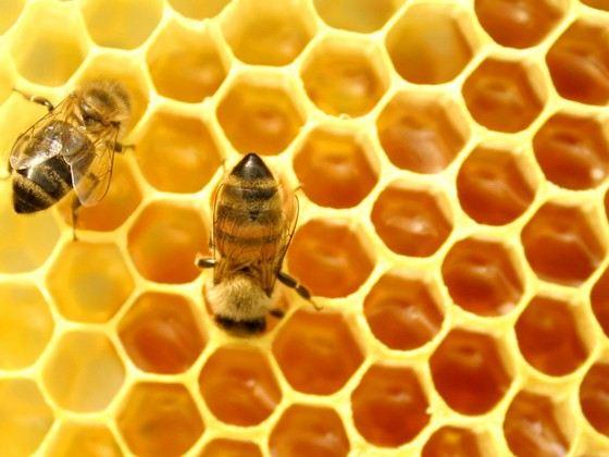 Мед - ценный пищевой и лечебный продукт
