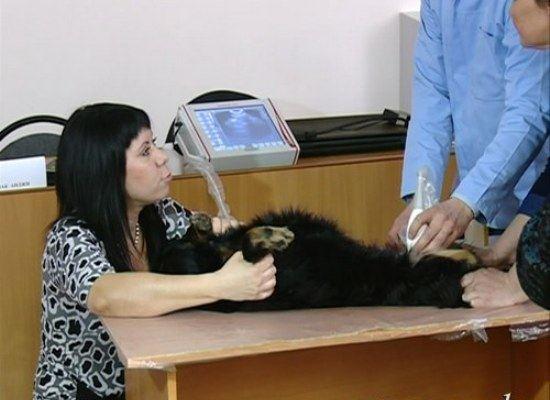 В ветеринарии РФ внедряют УЗИ и электронный документооборот
