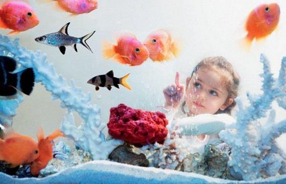 Домашние аквариумы редко бывают гигантских размеров