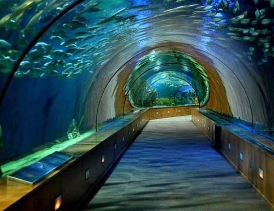 В аквариуме Туркуаза есть 80-метровый тоннель