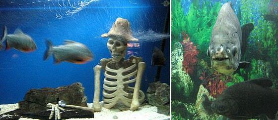 Не все рыбы могут ужиться в аквариуме