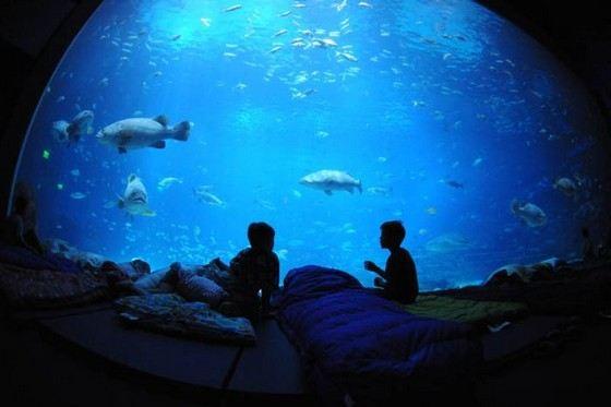 Самый большой в мире аквариум находится в США