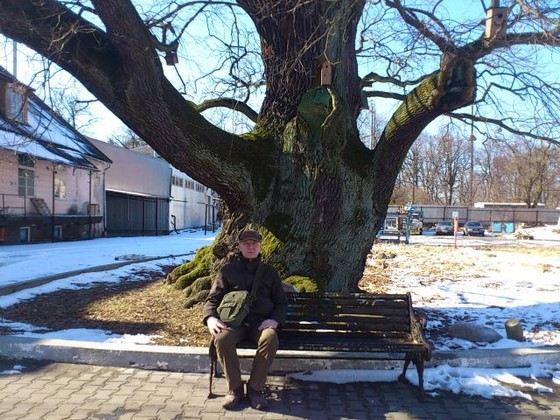 «Грюнвальдский дуб» одно из самых старых деревьев в России