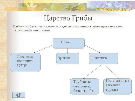 Пошаговый рецепт рассольника на зиму