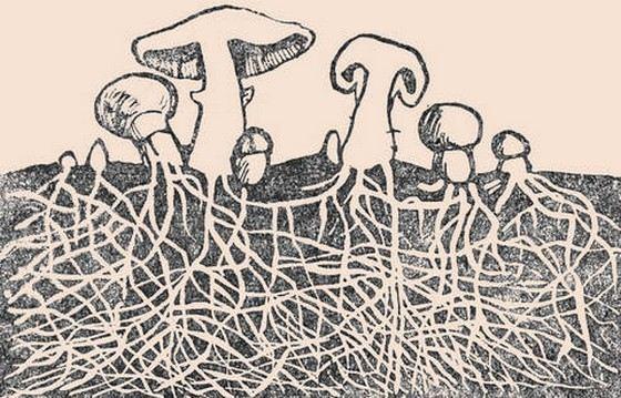 Грибница - невидимая, но очень большая часть гриба