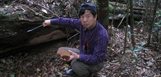 Самый большой гриб в мире нашли в Китае. Это был Fomitiporia ellipsoidea