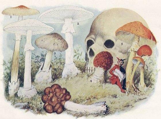 Отравления грибами тяжело лечится