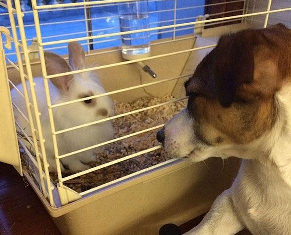Алсу завела белого кролика