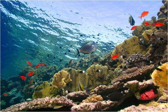 Вода в Красном море изумительно прозрачная