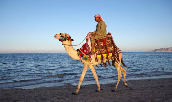 Саудовских граждан призвали избегать верблюдов из-за опасности заразиться вирусом