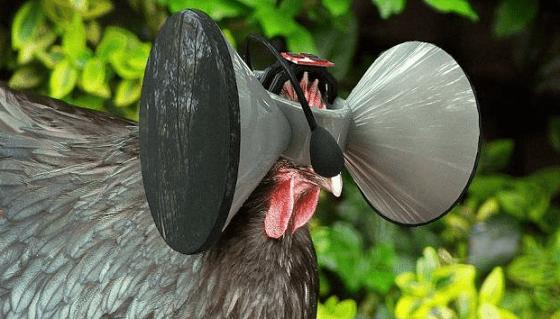 Устройство виртуальной реальности для кур