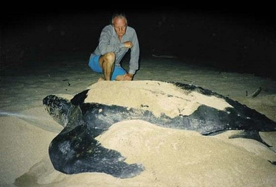 The leatherback turtle is considered the biggest turtle in the world.