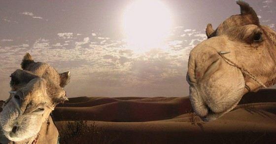 Пустыня Тар одна из самых жарких на Земле