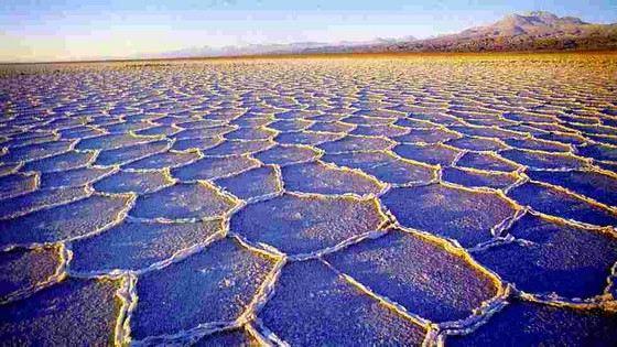 Не во всех уголках пустыни Атакама способны выживать животные и растения