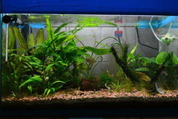 Можно проверить воду в аквариуме