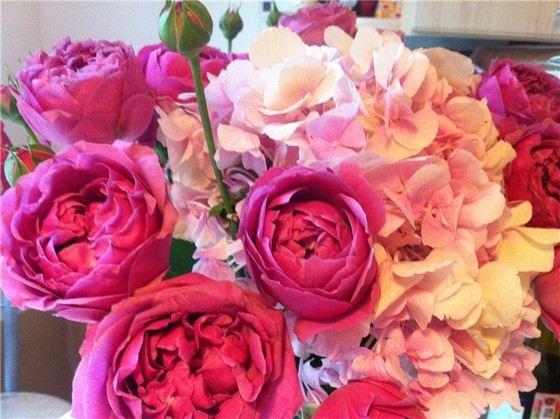 Маленькие цветы розы 3