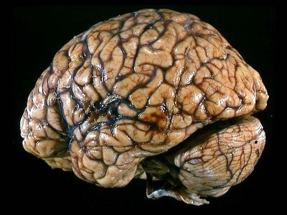 скачать мозги через торрент - фото 7