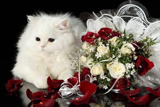 Туласнаб букеты самых большие красивых цветов цветов норильске цены