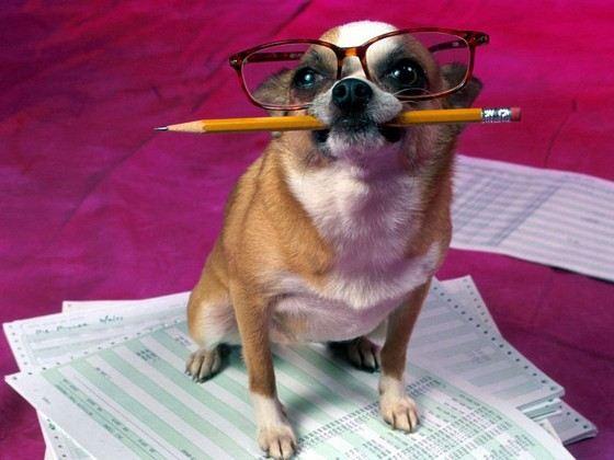 Собака - умный друг человека
