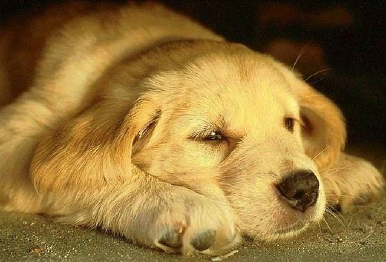 Несмотря на ум собаки все-таки остаются животными