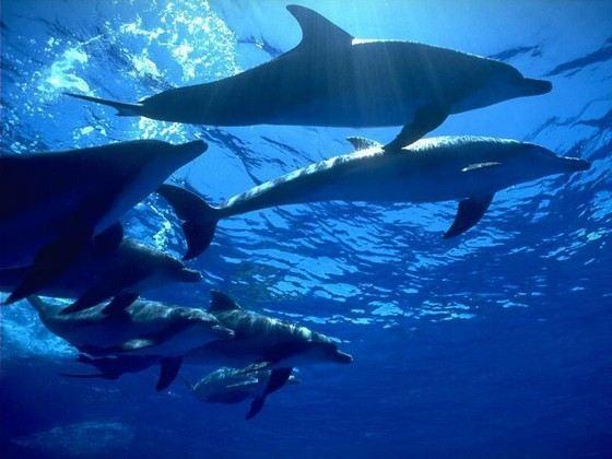 Дельфины настолько умны и социальны, что предпочитают жить семьями