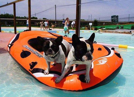 Все на борт! Две собаки с удовольствием плавают в лодке в новом бассейне