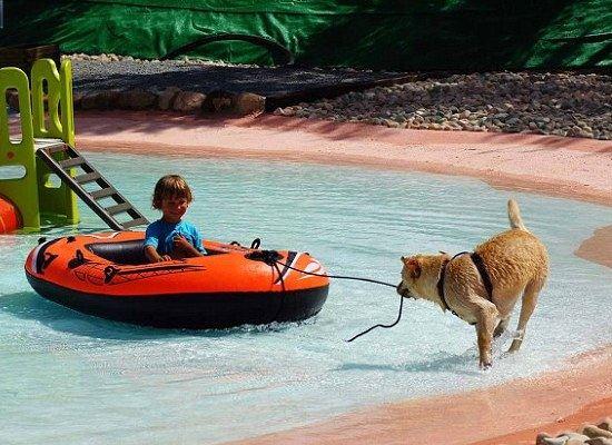 Пес играет с ребенком, катая его вдоль берега плавательного бассейна