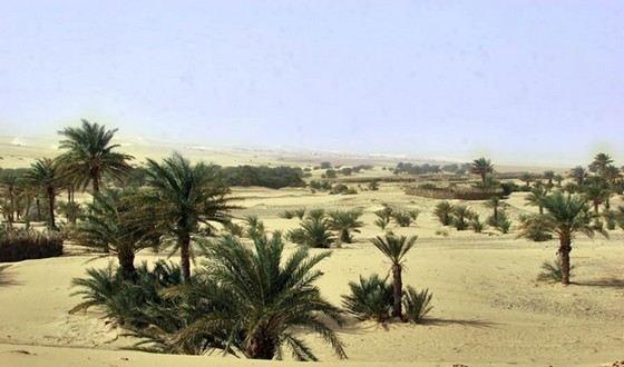 Мавритания мало населена из-за того, что большую площадь страны занимает пустыня