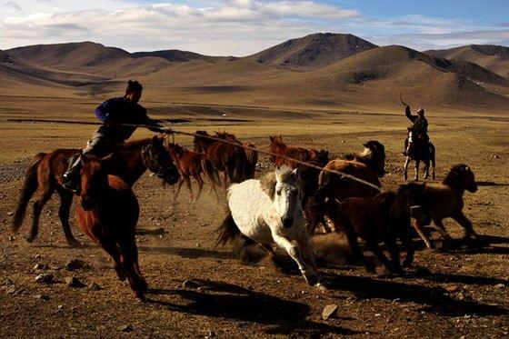 Лошадей в Монголии больше, чем людей